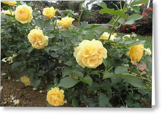 Yellow Roses Greeting Card