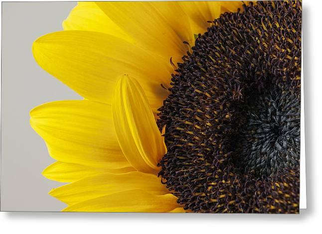 Yellow Sunflower Photograph Greeting Card