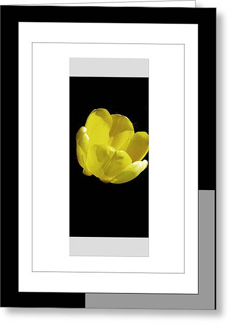 Yellow Tulip 1 Of 3 Greeting Card