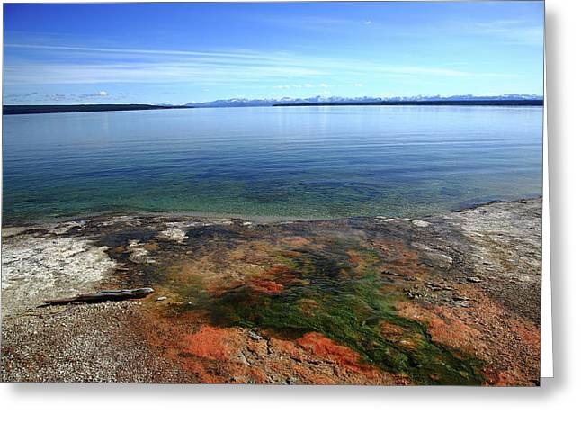 Greeting Card featuring the photograph Yellowstone Lake Colors by Frank Romeo