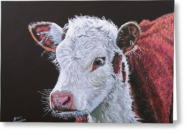 Young Bull Greeting Card by Stan Hamilton