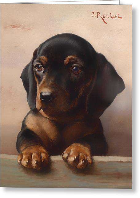 Young Dachshund Greeting Card by Mountain Dreams
