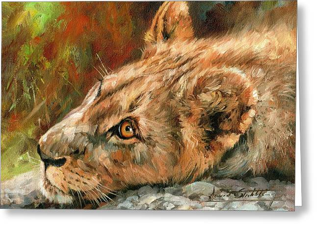 Young Lion Greeting Card by David Stribbling
