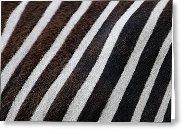 Zebra Wall Design 2 Greeting Card by Heike Hultsch
