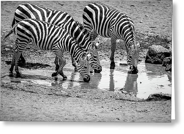 Greeting Card featuring the photograph Zebras At The Watering Hole by Marion McCristall