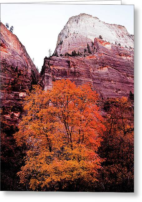 Greeting Card featuring the photograph Zion National Park by Norman Hall