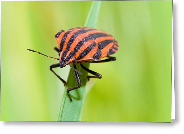 Bug Greeting Card by Andre Goncalves