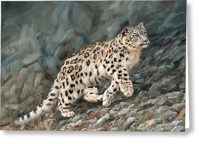 Snow Leopard Greeting Card by David Stribbling