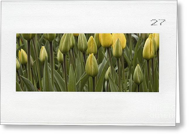 Tulips Greeting Card by Dania Reichmuth