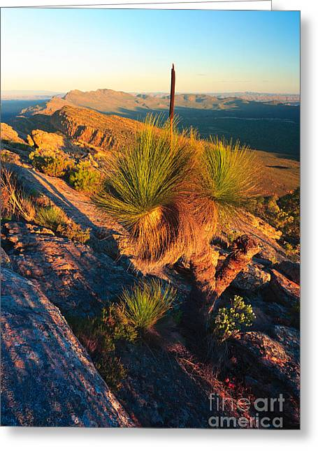 Wilpena Pound  Greeting Card by Bill  Robinson