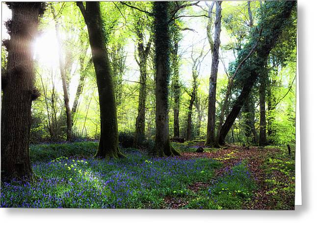 New Forest - England Greeting Card by Joana Kruse