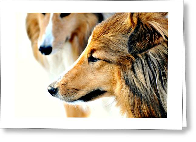 The Collie Greeting Card