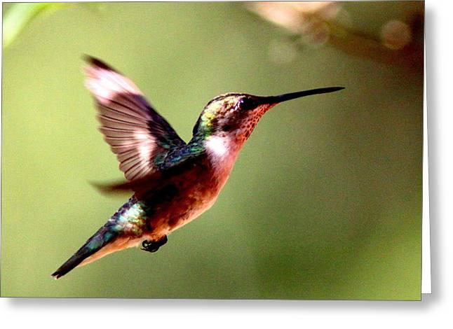 103456 - Ruby-throated Hummingbird Greeting Card