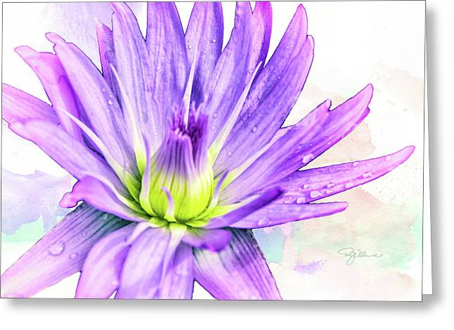 10889 Purple Lily Greeting Card by Pamela Williams