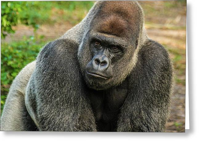 10898 Gorilla Greeting Card