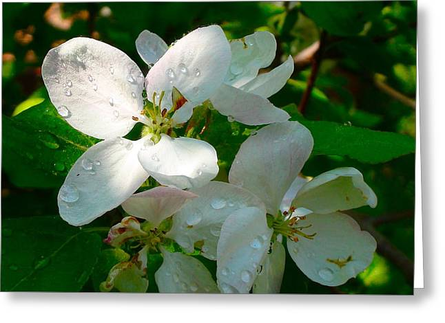 Greeting Card featuring the painting Apple Blossoms by Johanna Bruwer