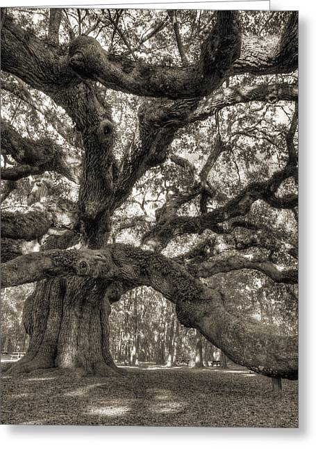 Angel Oak Live Oak Tree Greeting Card by Dustin K Ryan