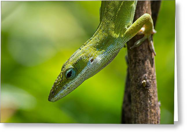 Green Lizard Greeting Card