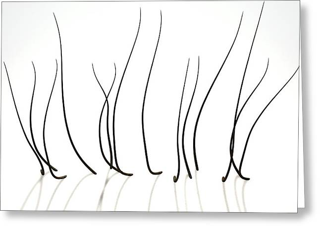 Microscopic Hair Fibers Greeting Card by Allan Swart