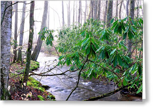 Middle Fork Of Williams River Greeting Card by Thomas R Fletcher