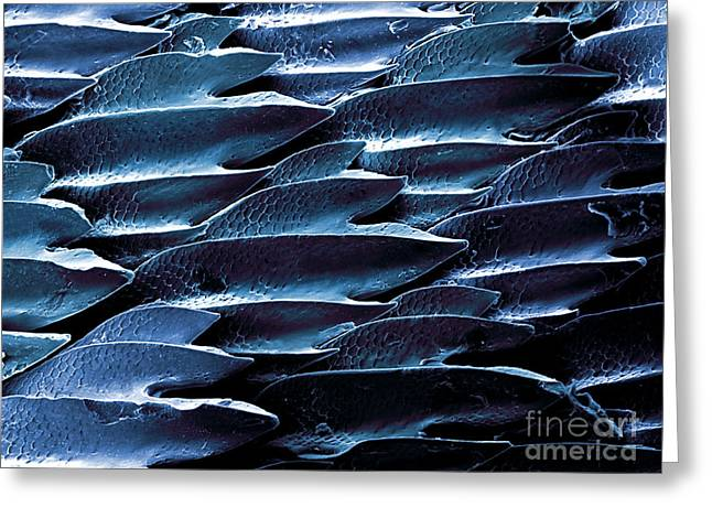 Shark Skin, Sem Greeting Card by Ted Kinsman