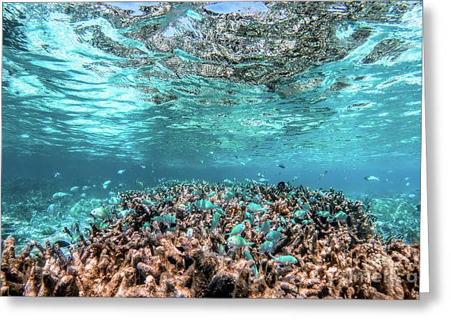 Underwater Coral Reef And Fish In Indian Ocean, Maldives. Greeting Card
