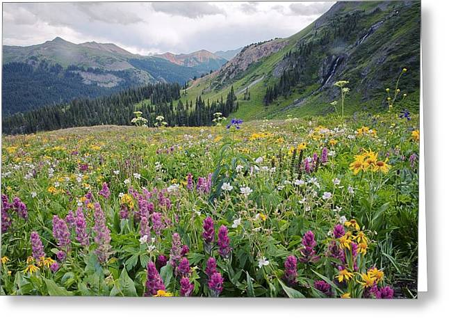 Wildflower Meadow Greeting Card by Bob Gibbons