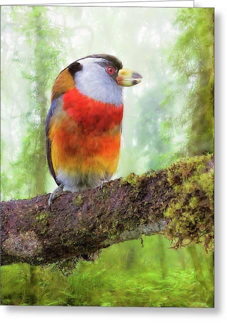 Toucan Barbet Greeting Card