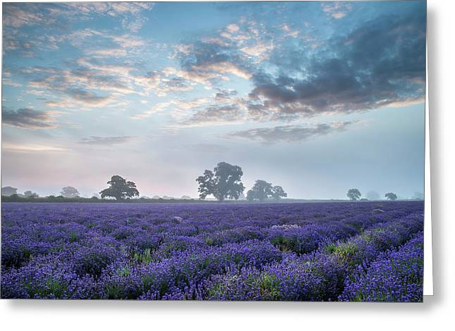 Beautiful Dramatic Misty Sunrise Landscape Over Lavender Field I Greeting Card by Matthew Gibson
