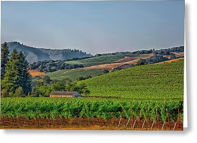 California Vineyard Greeting Card by Mountain Dreams