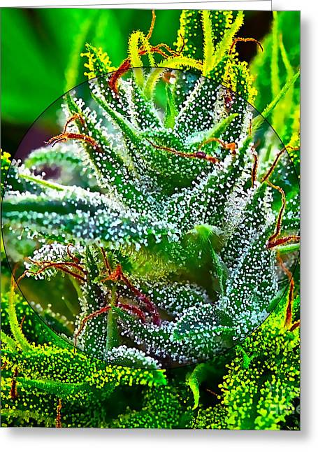 Cannabis 420 Collection Greeting Card by Marvin Blaine