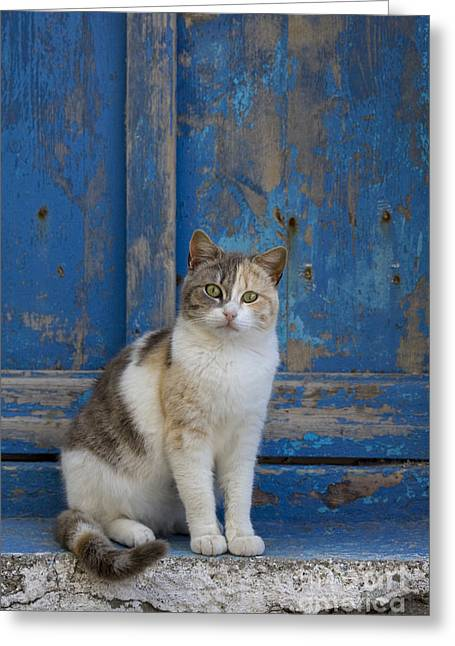 Domestic Pet Portraits.house Cat Greeting Cards - Cat In A Doorway, Greece Greeting Card by Jean-Louis Klein & Marie-Luce Hubert