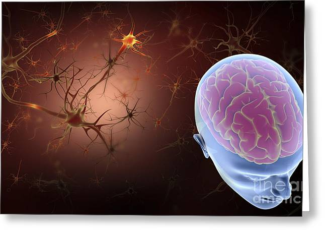 Microbiology Greeting Cards - Conceptual Image Of Human Brain Greeting Card by Stocktrek Images
