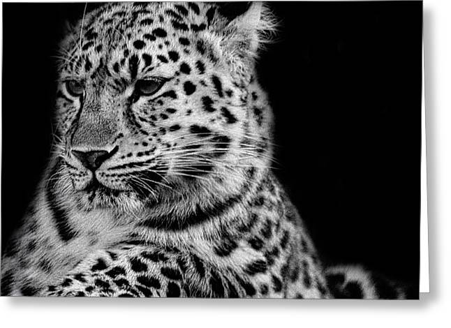 Amur Leopard Greeting Card