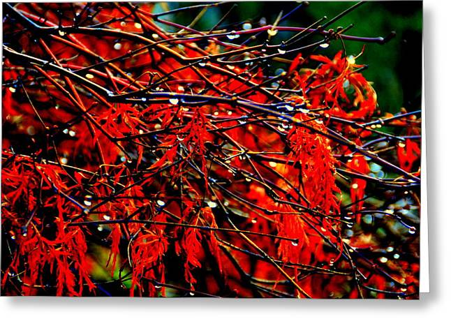 Autumn Colors Greeting Card by Aron Chervin
