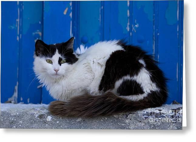 Cat On A Greek Island Greeting Card