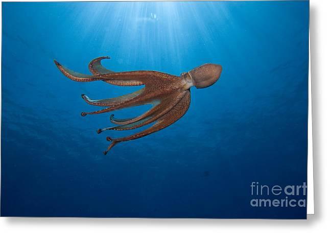 Hawaii, Day Octopus Greeting Card