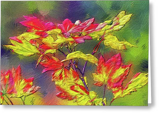 Vine Maple Color Greeting Card