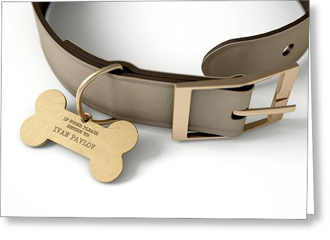Leather Collar With Tag Greeting Card by Allan Swart
