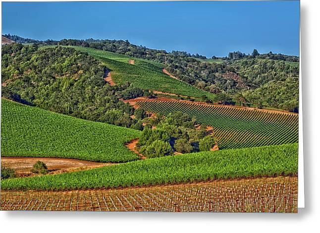 Napa Valley Vineyard Greeting Card by Mountain Dreams