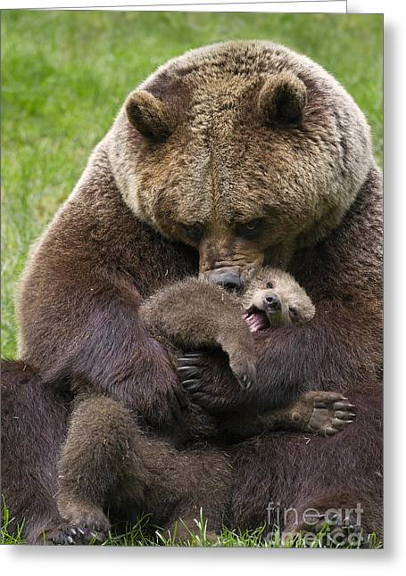 Mother Bear Cuddling Cub Greeting Card by Arterra Picture Library