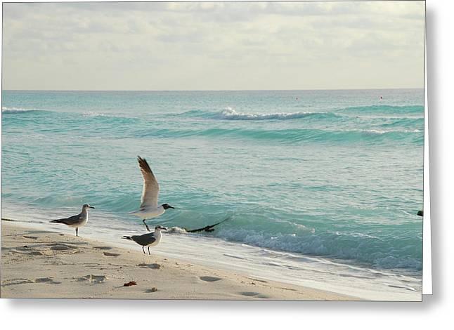 Beautiful Seaside Scenery Greeting Card