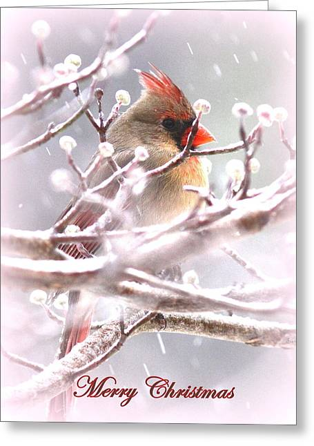 1554-003 Cardinal Greeting Card by Travis Truelove