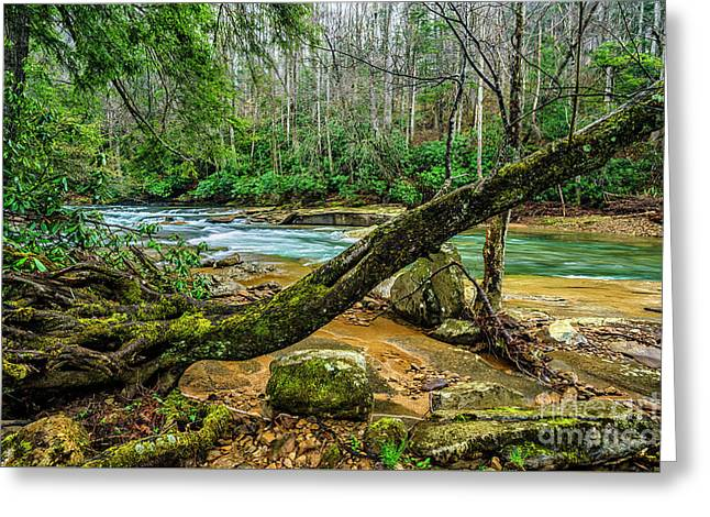Back Fork Of Elk River Greeting Card by Thomas R Fletcher