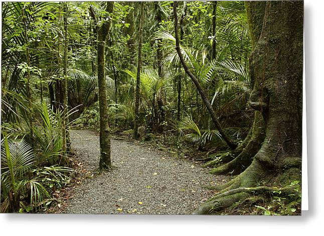 Walking Trail Greeting Card by Les Cunliffe