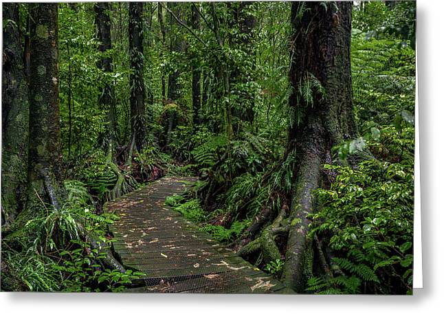 Greeting Card featuring the photograph Forest Boardwalk by Les Cunliffe