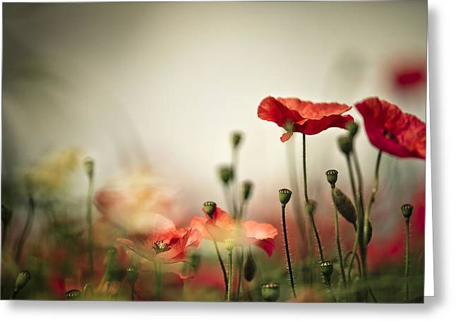 Poppy Meadow Greeting Card by Nailia Schwarz