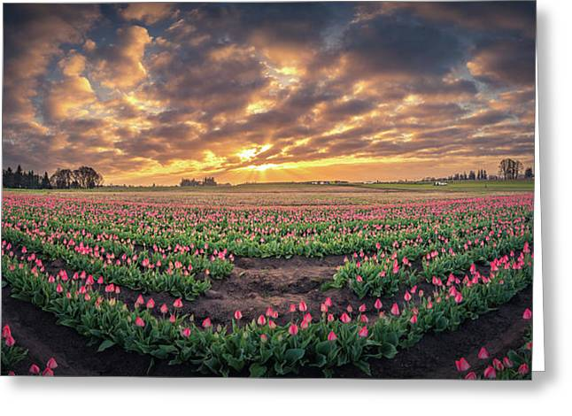 Greeting Card featuring the photograph 180 Degree View Of Sunrise Over Tulip Field by William Lee