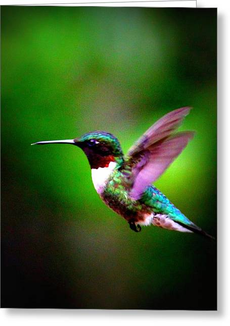 1846-007 - Ruby-throated Hummingbird Greeting Card by Travis Truelove