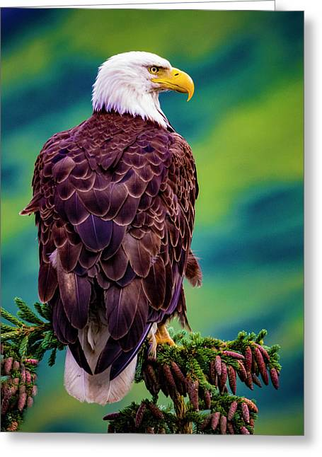 Greeting Card featuring the photograph Bald Eagle by Norman Hall